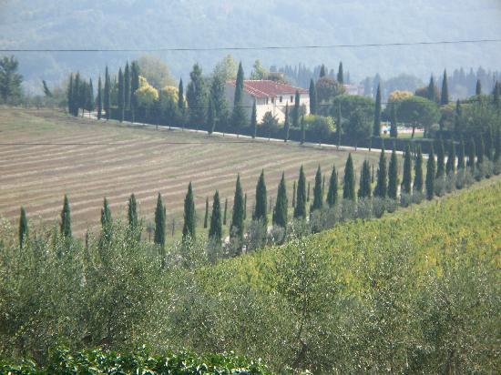 Rignano sull'Arno, Italia: The fairytale driveway