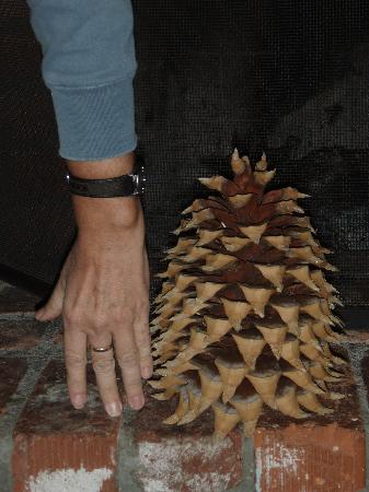 Arrowhead Pine Rose Cabins: Coulter Pinecone