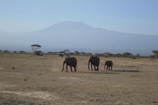 Baobab Beach Resort & Spa: Killamanjaro and elephants at amboseli national park