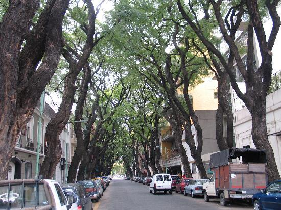 A street in Palermo framed by local tipa trees. - Picture of Buenos ...