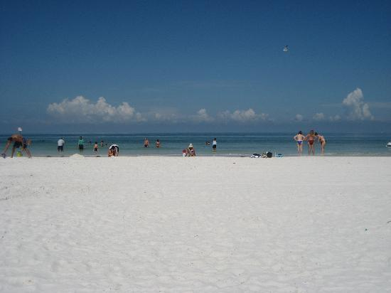 Hilton Clearwater Beach Resort & Spa: View from the beach