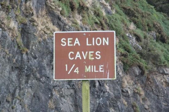 Sea Lion Caves Photo