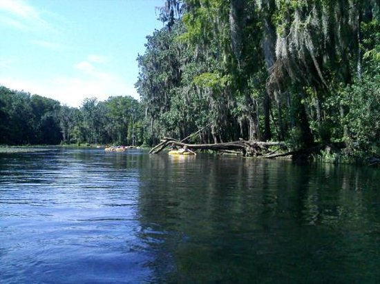 Fort White, FL: Beautiful Ichetucknee River