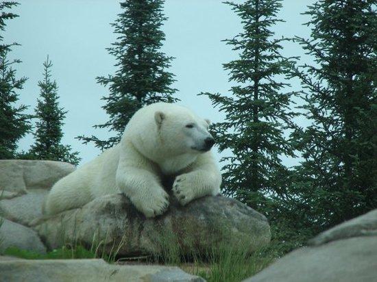 Polar Bear Habitat & Heritage Village