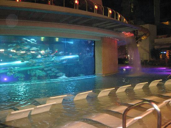 Shark Pool Picture Of Golden Nugget Hotel Las Vegas Tripadvisor