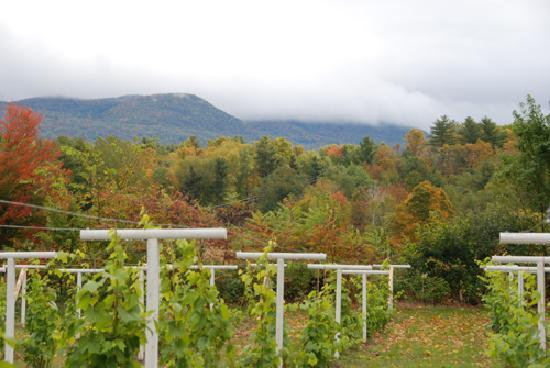 Autumn Mountain Winery & Cabins: Beautiful view from the cottages.