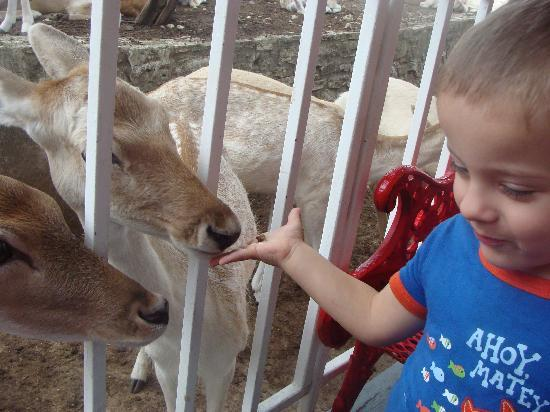 San Marcos, TX: Son #1 was ALL ABOUT feeding the deer.