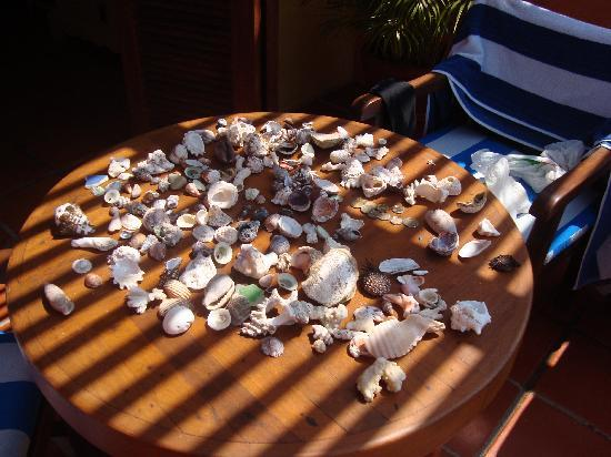 Costa Careyes: shell collection