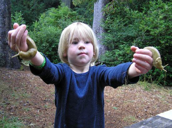 Florence, OR: finding banana slugs after a rain