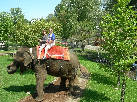 Elephant Ride Picture Of African Lion Safari Hamilton