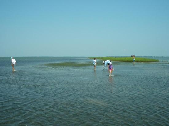 Beaufort, Carolina del Norte: Clamming