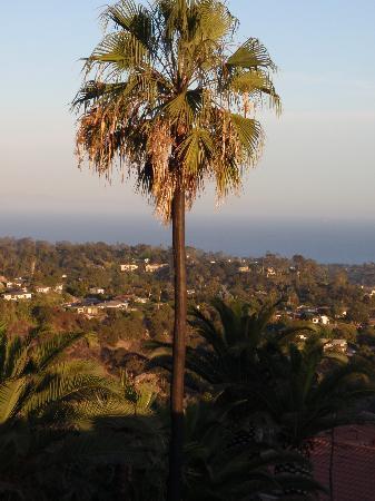 Santa Barbara, CA: Palm tree on the American Riviera
