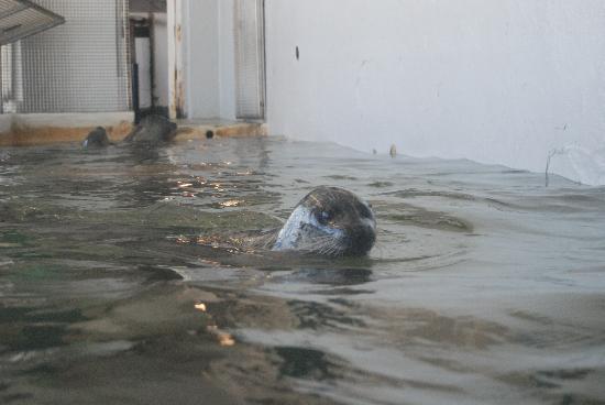 Seaside, OR: seals