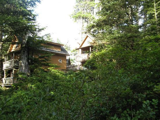 Dog Friendly Cabins Ucluelet