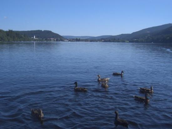 Titisee-Neustadt Germany  city images : Titisee Neustadt, Germany ティティゼ ノイシュタット ...