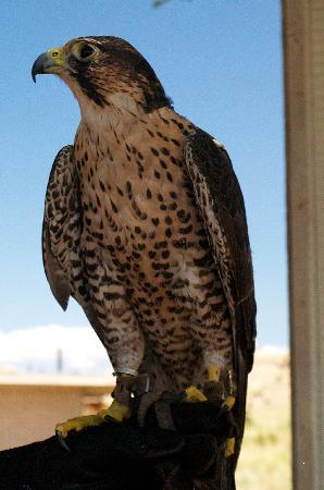 Chapelle Street Casitas: Resident at the Wildlife Center, Espanola, NM