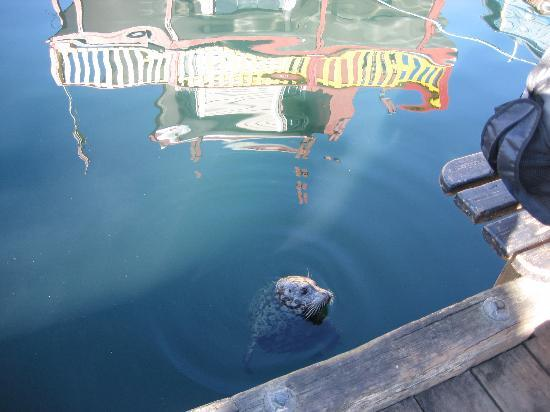 Abigail's Hotel : seal in Victoria harbour