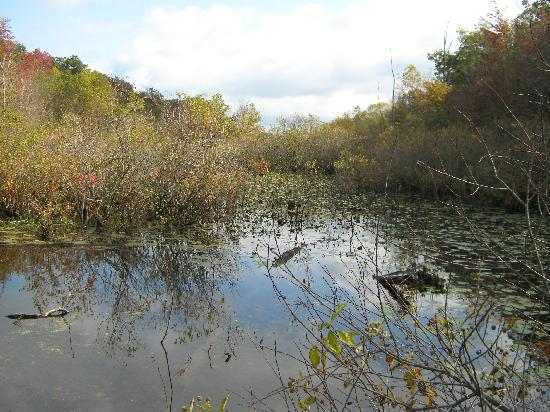 Indiana Dunes State Park: The Great Marsh
