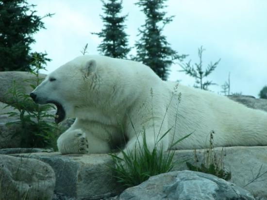 Polar Bear Habitat & Heritage Village (Cochrane): All You ...