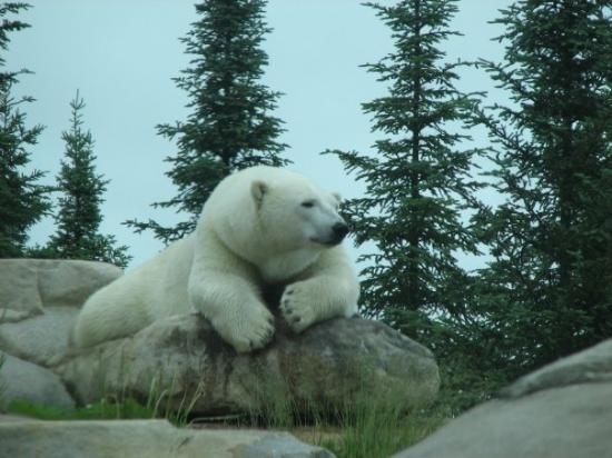 Polar Bear Habitat & Heritage Village (Cochrane) - All You ...