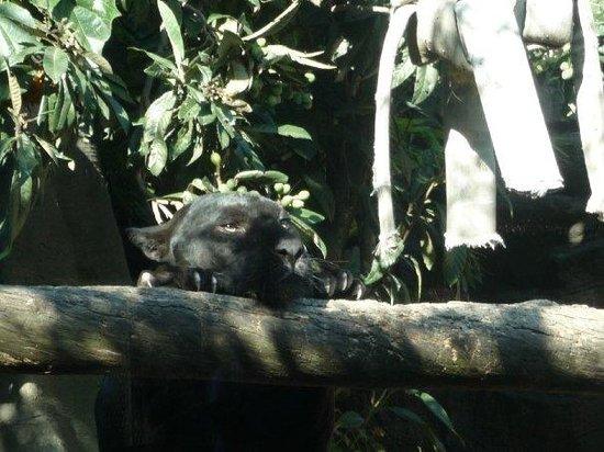 เม็กซิโกซิตี, เม็กซิโก: Öffentlicher Zoo im Bosque de Chapultepec