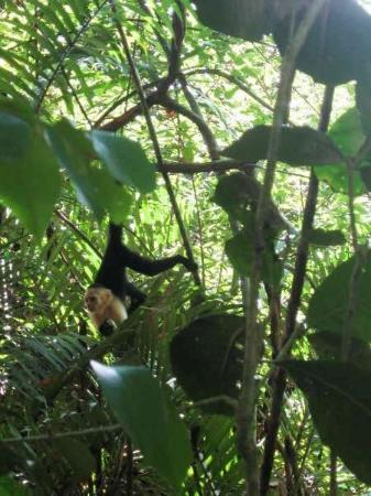 Quepos, Costa Rica: Monkeys!