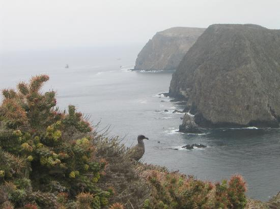Parque Nacional Channel Islands, CA: East Anacapa Island