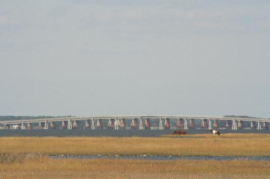 Assateague Island National Seashore Campground : Telephoto view from our campsite