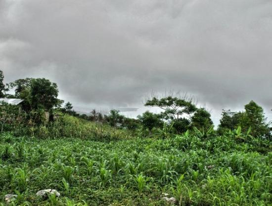 Jacmel, Haiti: Corn Field in Mare Brignol you can see the bellance beach just under the clouds