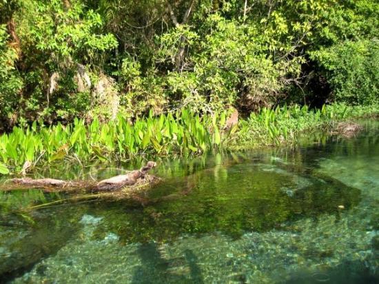 Bonito, MS: Pantanal - Brasilien