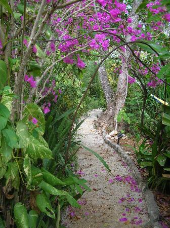 Banana's Garden Bed & Breakfast: A stroll through the Gardens!