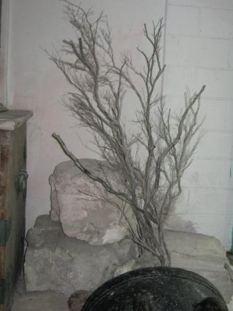 มัลดีฟส์ - บันโดส์: sort koral