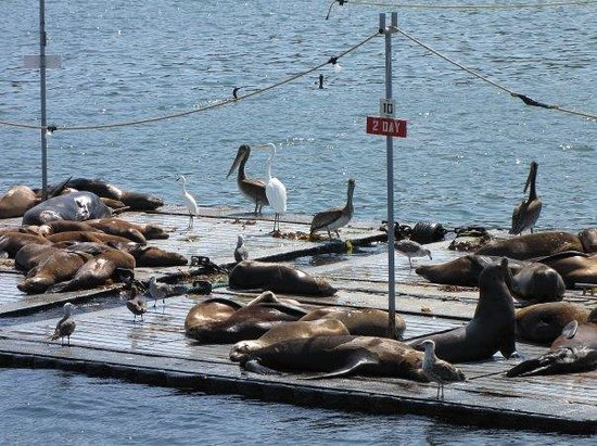 Oh And Birds With The Sea Lions Picture Of Flagship Cruises Amp Events San Diego Tripadvisor
