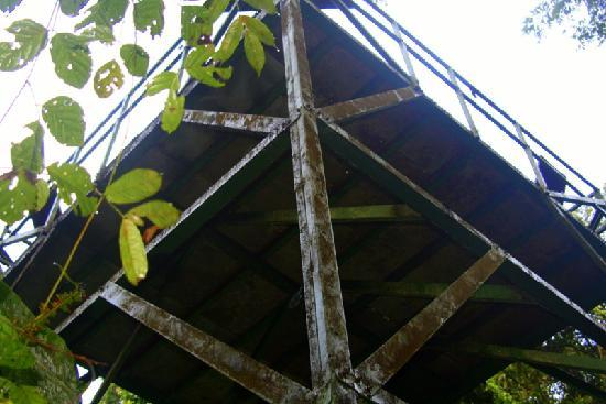 ‪‪Golfo Dulce Lodge‬: Tower in the Jungle--Hike‬