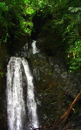 Golfo Dulce Lodge: Waterfall
