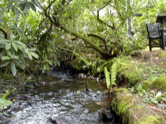 Nether Stowey, UK: Another shot of the large stream.