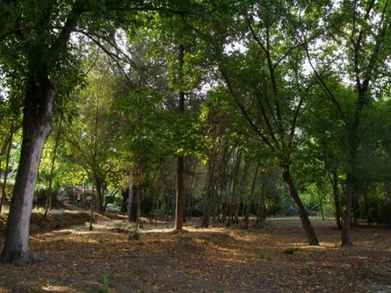 Fotos de Alcalá de Guadaira - Imágenes destacadas de ...