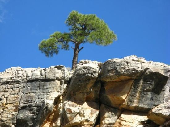 Bright Angel Trail: Grand Canyon
