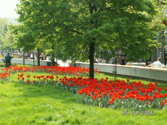 Tulip Festival, Pitesti