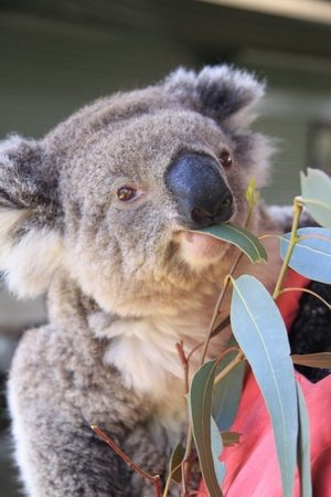 cohunu koala park byford 2018 all you need to know. Black Bedroom Furniture Sets. Home Design Ideas
