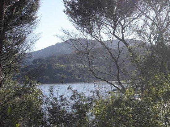 Coromandel Forest Park