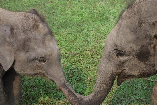 Hotel Parkside: twin elephants saying hello