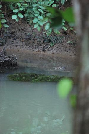 هوتل باركسايد: croc