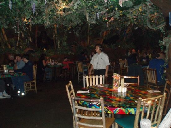 reinforest cafe inside picture of rainforest cafe san francisco rh tripadvisor com