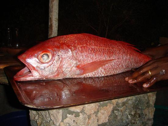 Kanani House: beatufiul ruby snapper for dinner!