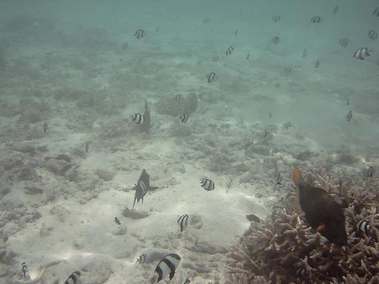 Ellaidhoo Maldives by Cinnamon: Snorkelling