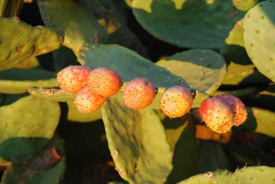 La Pavoncella : Kaktus Feigen - mmmhhh lecker