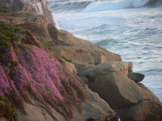 La Jolla Cove: LaJolla CA, June 2008