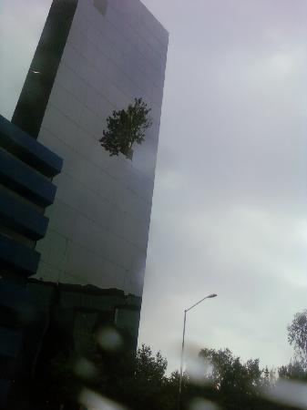 Мехико, Мексика: A tree grows out of this building