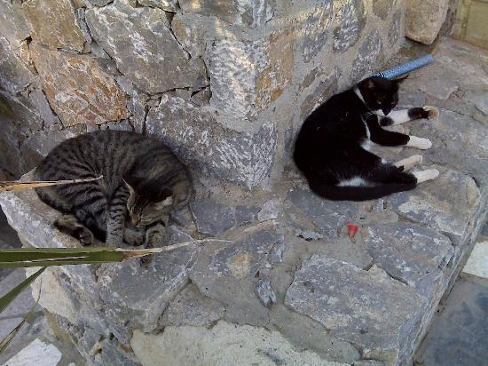 Stavros, Grèce : Even cats love it!
